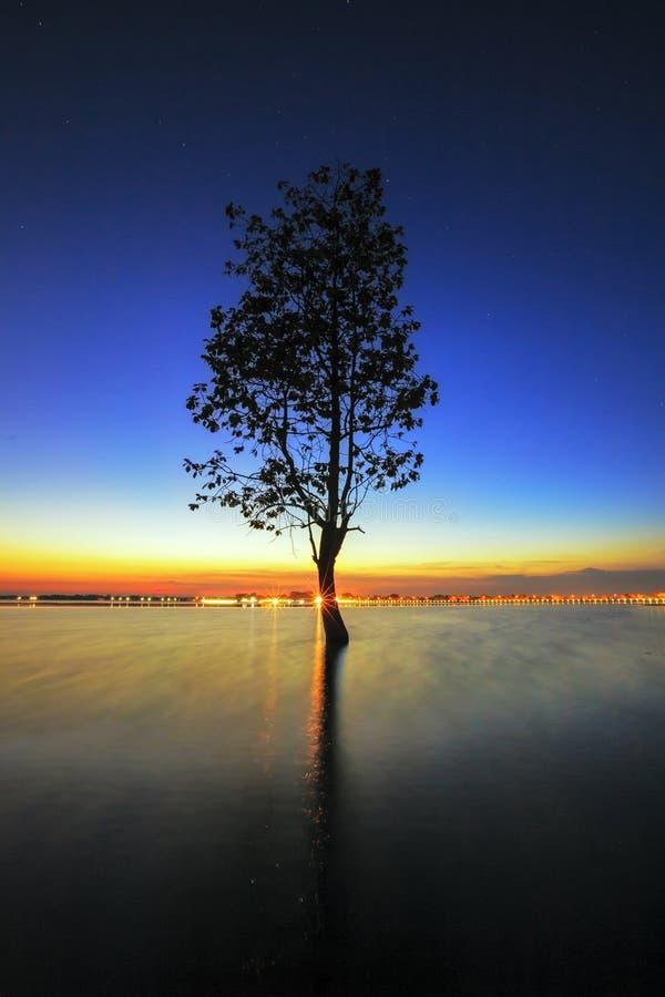 La silhouette d'arbre se penchant au-dessus du lac dans Surin photo libre de droits