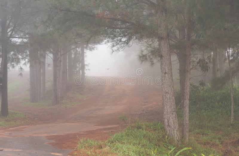 La silhouette d'un arbre et le brouillard 01 image stock