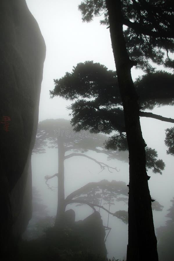 La silhouette de l'arbre de pin photographie stock
