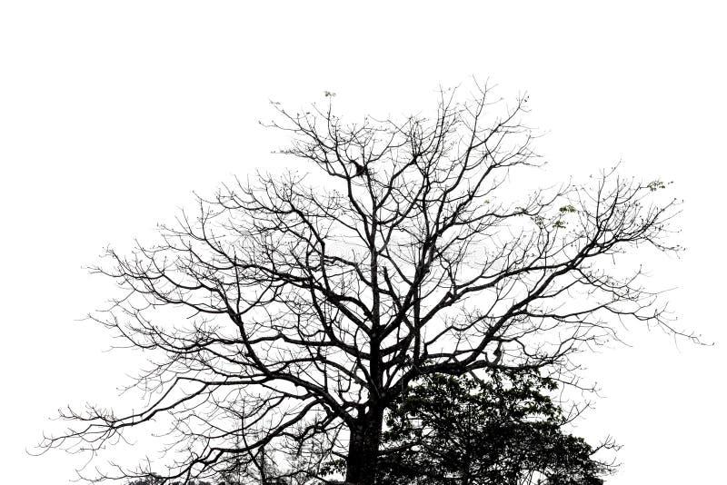 La silhouette de l'arbre mort de nature image stock