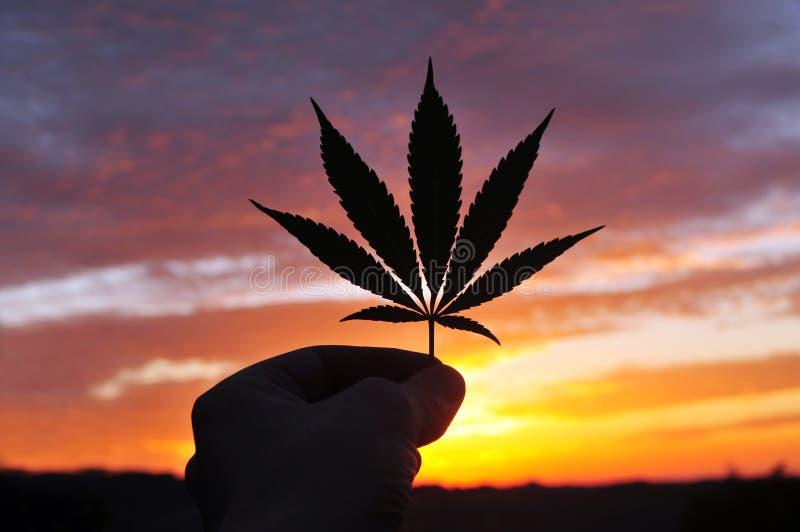 La silhouette de la main, tenant le cannabis poussent des feuilles au lever de soleil image stock