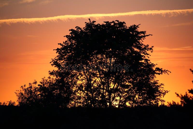 La silhouette dell'albero nero sopra il cielo arancione immagini stock libere da diritti