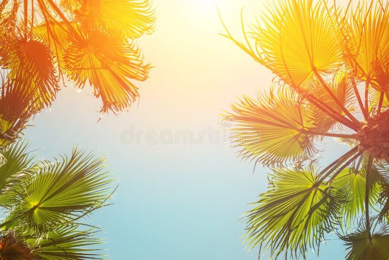 La silhouette du palmier tropical vert part avec le ciel bleu clair sur le backgroung au temps de coucher du soleil ou de lever d photos libres de droits