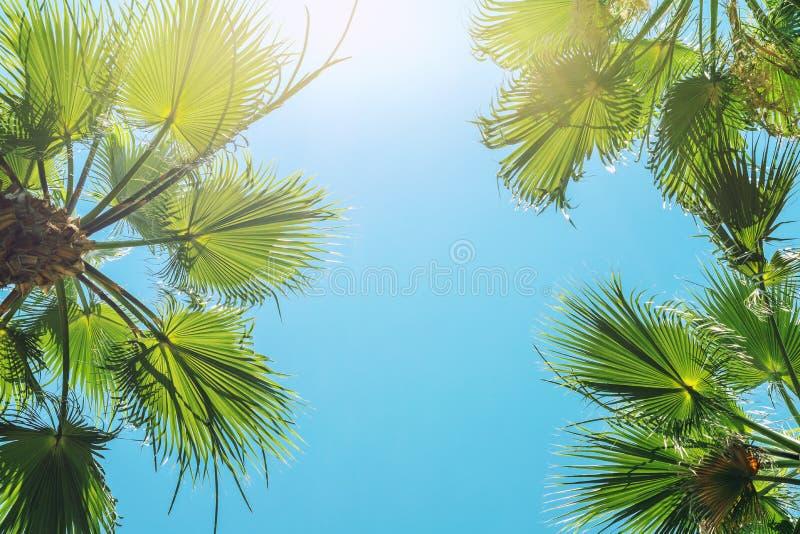 La silhouette du palmier tropical vert part avec le ciel bleu clair sur le backgroung au temps de coucher du soleil ou de lever d photo libre de droits