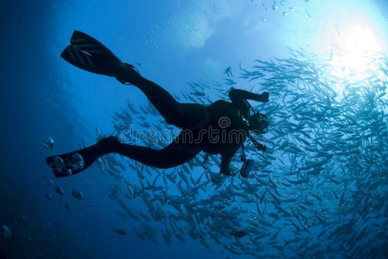 La silhouette du plongeur image libre de droits