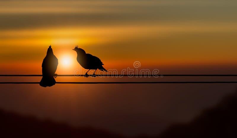 La silueta de los pares del pájaro que se sientan en electricidad telegrafía en fondo de oro borroso de la puesta del sol foto de archivo