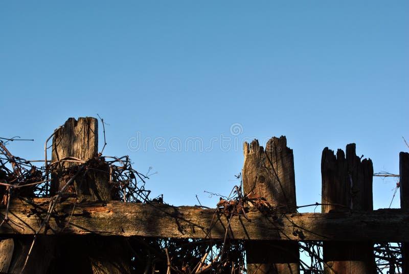La silueta de madera vieja de la cerca con el sol se enciende en ella con las ramas secas de la uva salvaje fotos de archivo libres de regalías