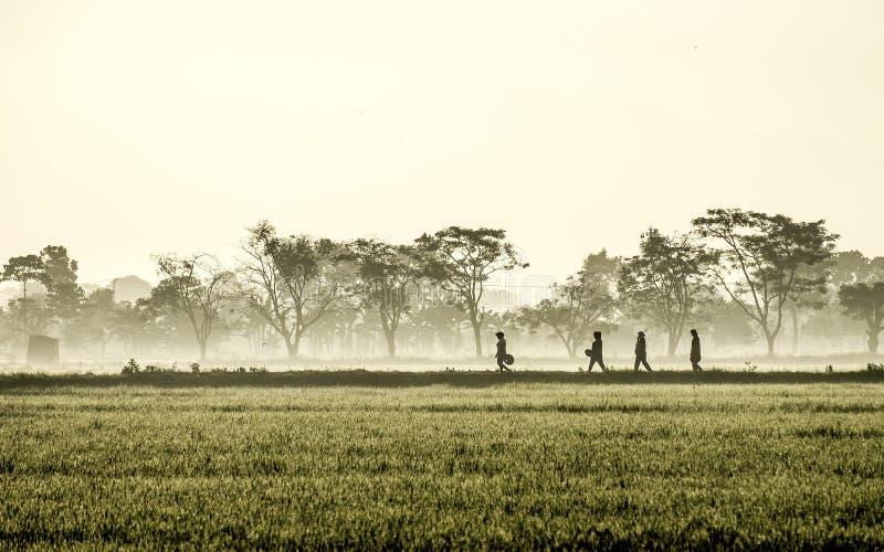La silueta de varias personas que caminan en el medio del arroz extenso coloca imagen de archivo libre de regalías