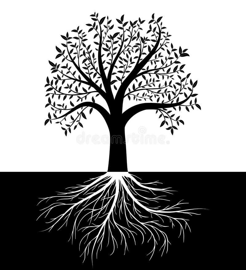 La silueta del árbol con las hojas y las raíces vector el fondo stock de ilustración