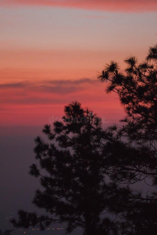 La silueta del árbol de pino fotografía de archivo libre de regalías