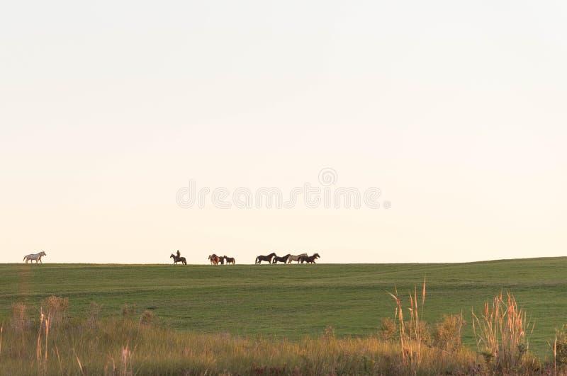 La silueta del campo 03 de la cría de caballos foto de archivo