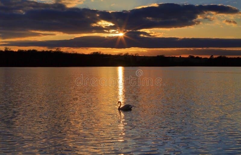 La silueta del cisne mudo, de nubes y de la puesta del sol reflejó en las ondulaciones del depósito de Ravensthorpe fotos de archivo libres de regalías