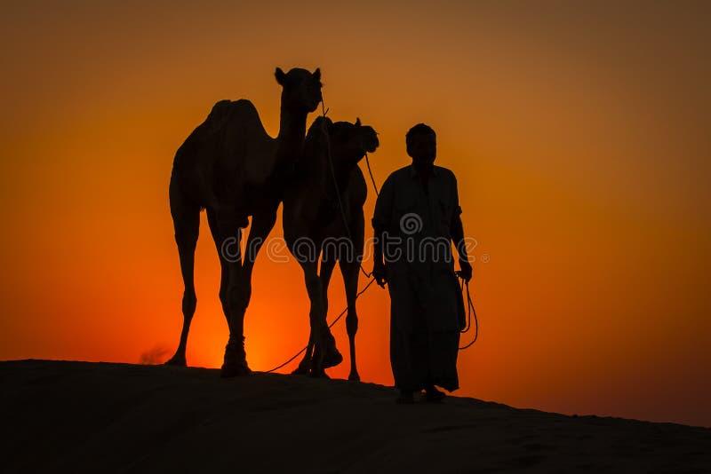 La silueta del hombre y dos camellos en la puesta del sol en Thar abandonan cerca de Jaisalmer, Rajasthán, la India fotografía de archivo libre de regalías