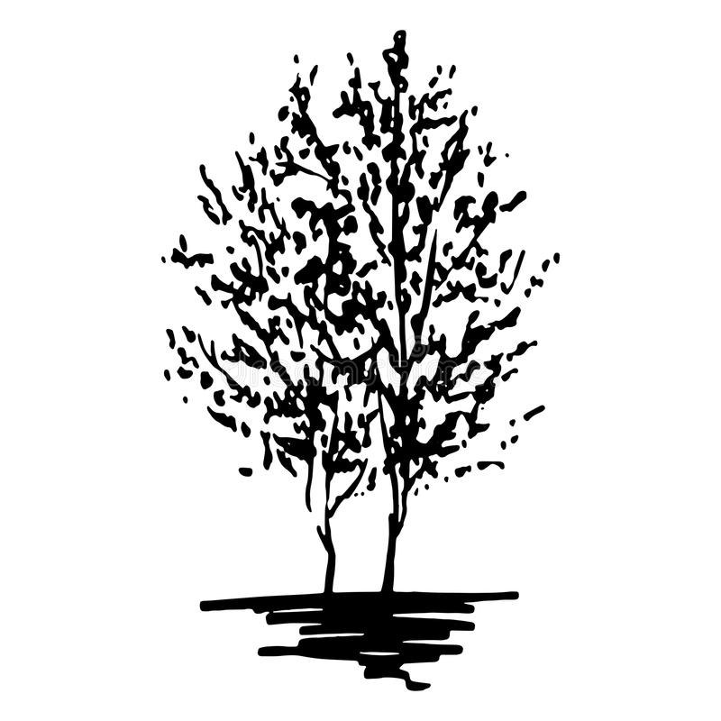 La silueta monocromática de los árboles bosquejó la línea vector aislado del arte ilustración del vector