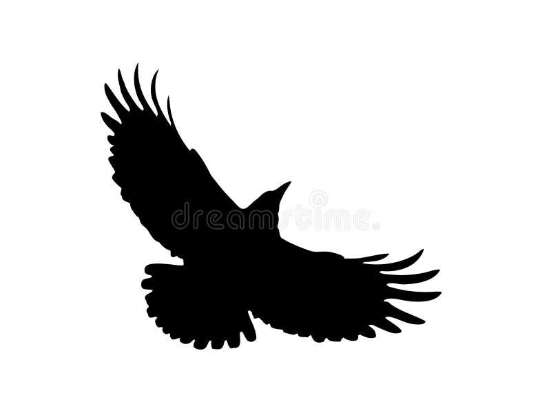 La silueta negra de un grajo libre illustration