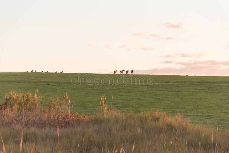 La siluetta del campo 04 di allevamento di cavalli immagini stock libere da diritti
