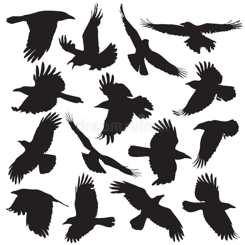 La siluetta del corvo ha messo 01 illustrazione di stock