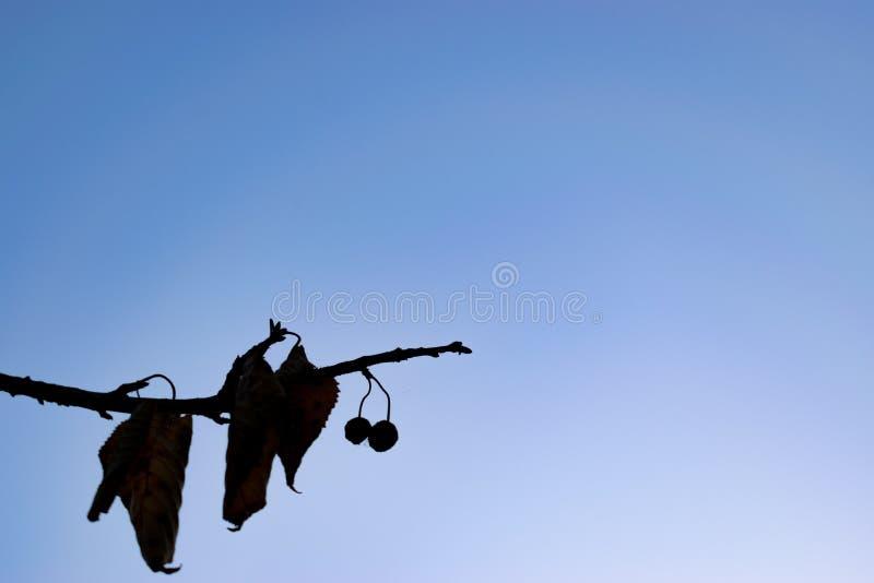 La siluetta del ramo delle foglie con stile d'annata Priorità bassa per una scheda dell'invito o una congratulazione fotografia stock
