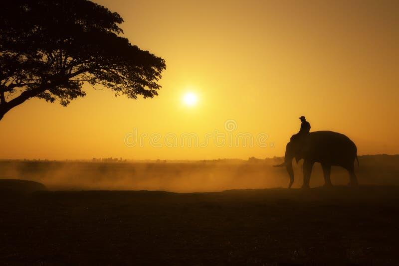 La siluetta dell'elefante e del mahout su mattina del campo immagini stock libere da diritti