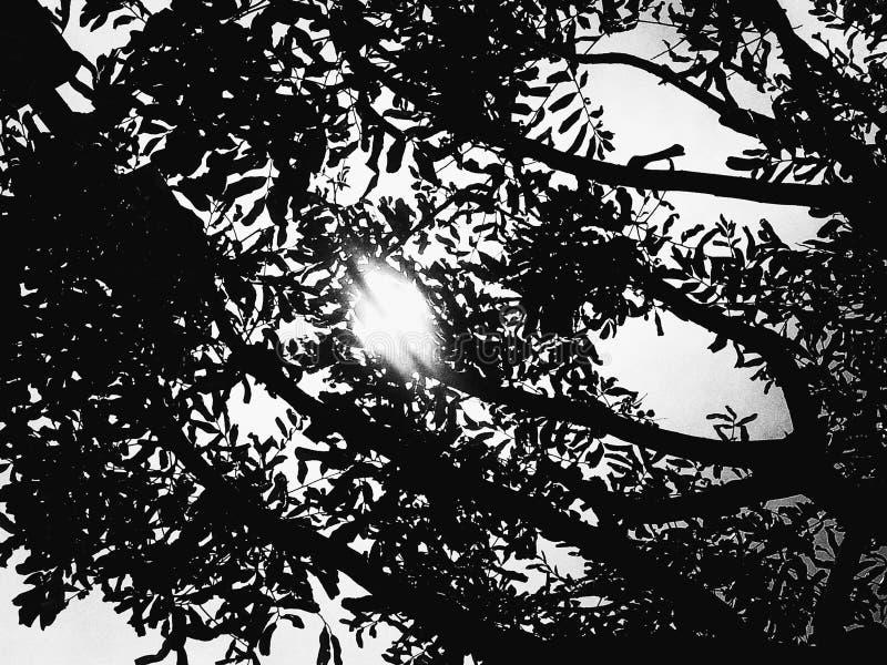 La siluetta della natura fotografie stock