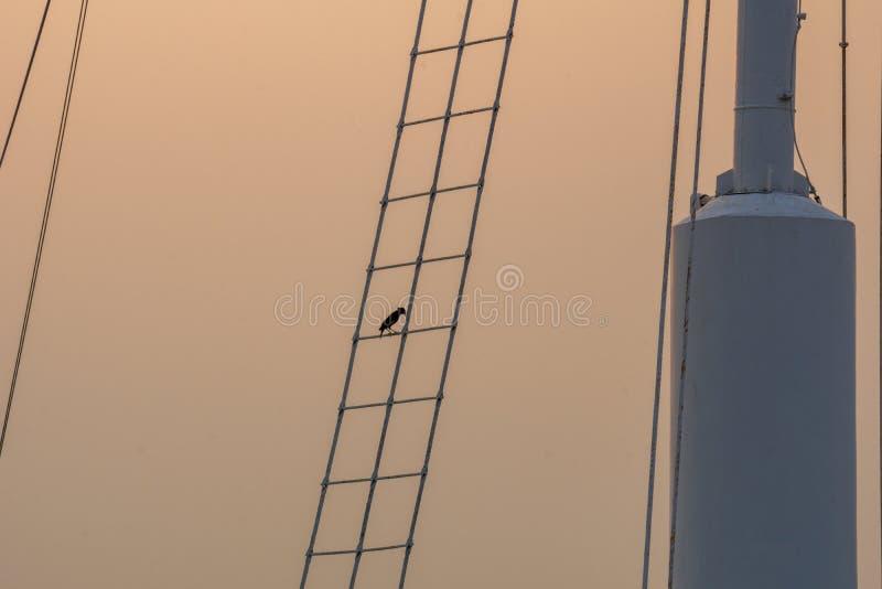 La siluetta della tenuta dell'uccello su una scala ha attaccato al palo di bandiera immagine stock libera da diritti