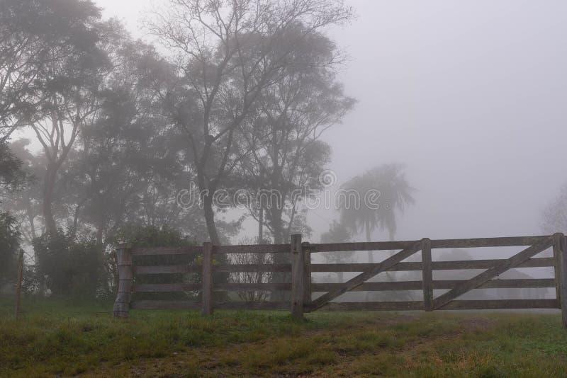 La siluetta di un albero e della nebbia 06 immagine stock libera da diritti
