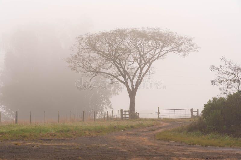 La siluetta di un albero un palo della luce in mezzo della nebbia fotografia stock