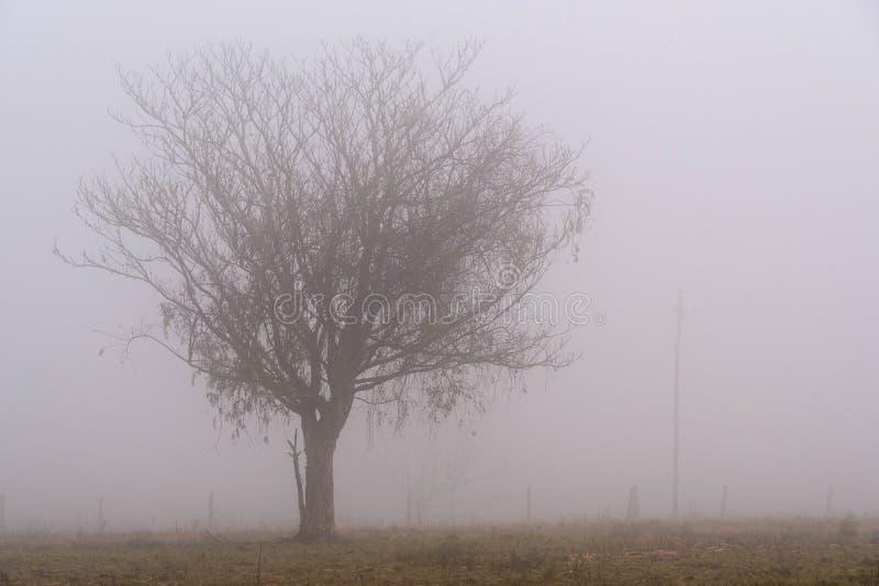 La siluetta di un palo della luce dell'albero in mezzo della nebbia fotografia stock libera da diritti