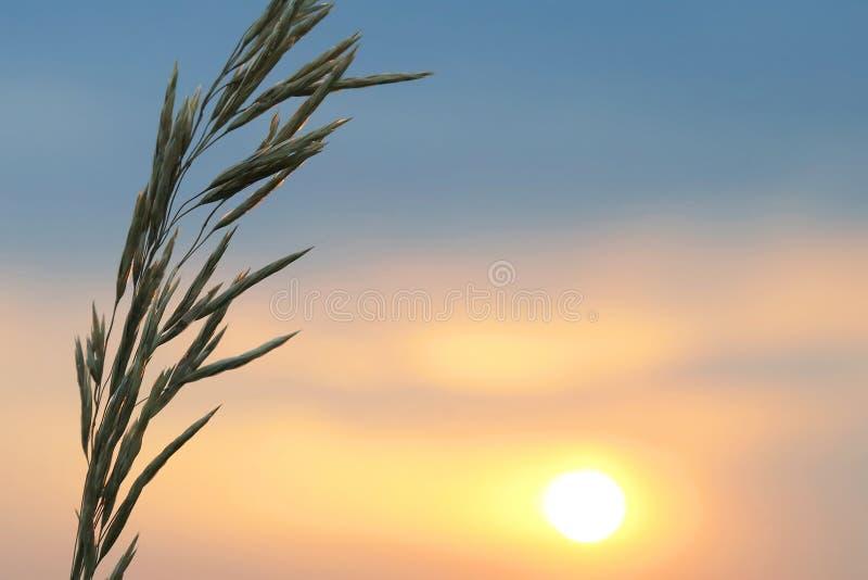 La siluetta pianta il fiore contro il tramonto immagine stock libera da diritti