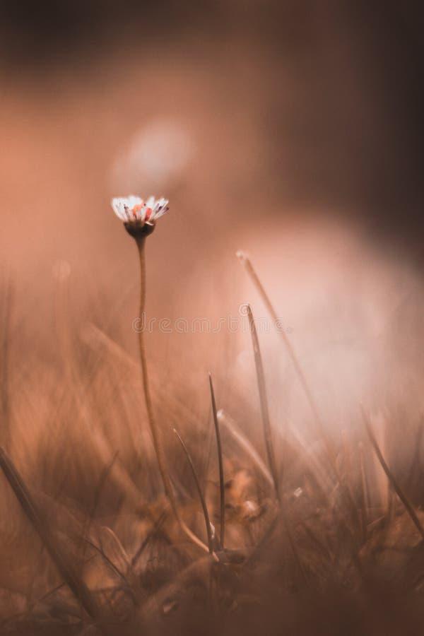 La simplicidad de la flor imagenes de archivo