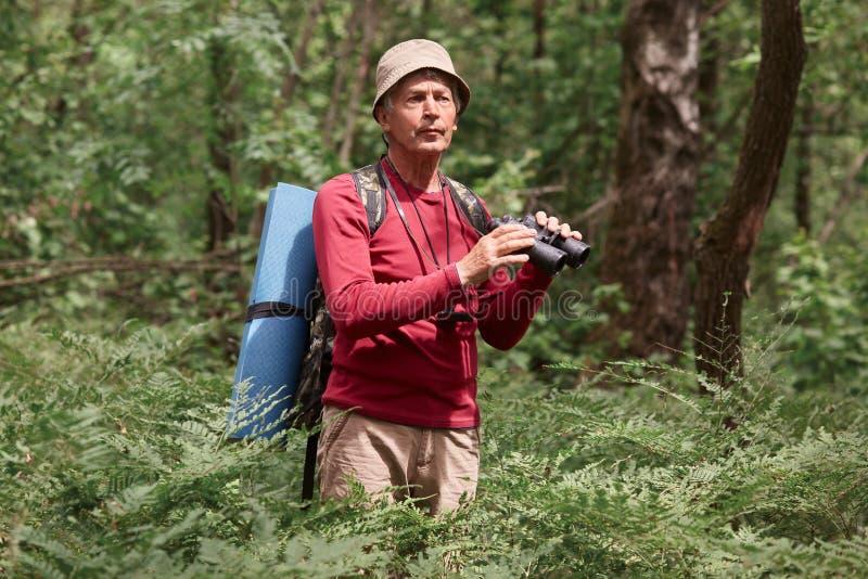La situación masculina emocionada del caminante de tirón entre árboles con los prismáticos en bosque, parece concentrada, varón d foto de archivo
