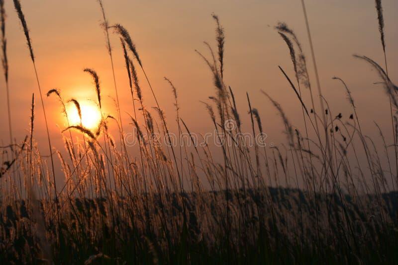 La soirée Sun dans l'herbe photographie stock