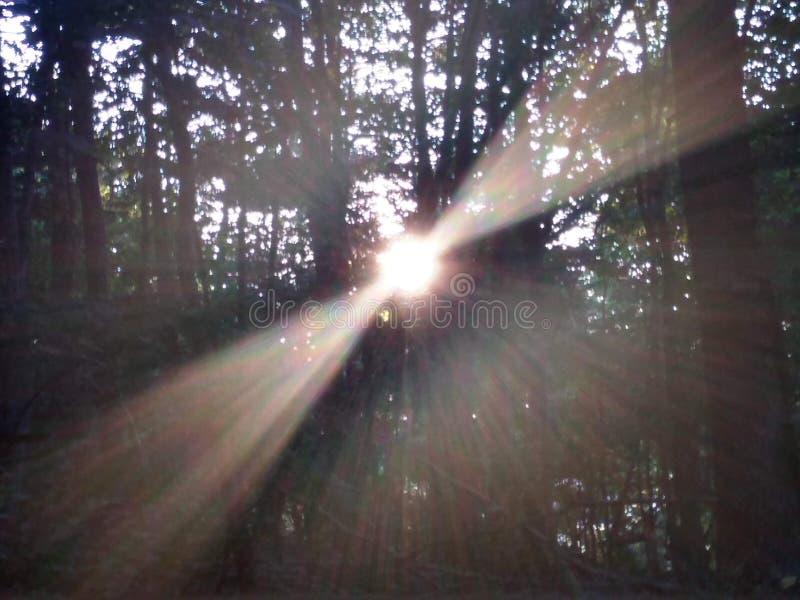 La sol del abucheo de la ojeada a lanzó el bosque durante subida del sol foto de archivo