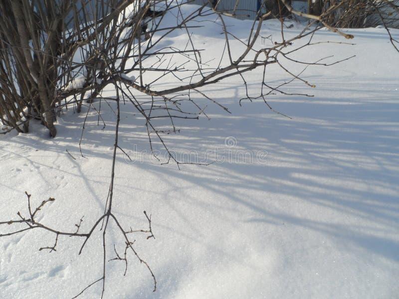 La sombra de las ramas en la nieve foto de archivo