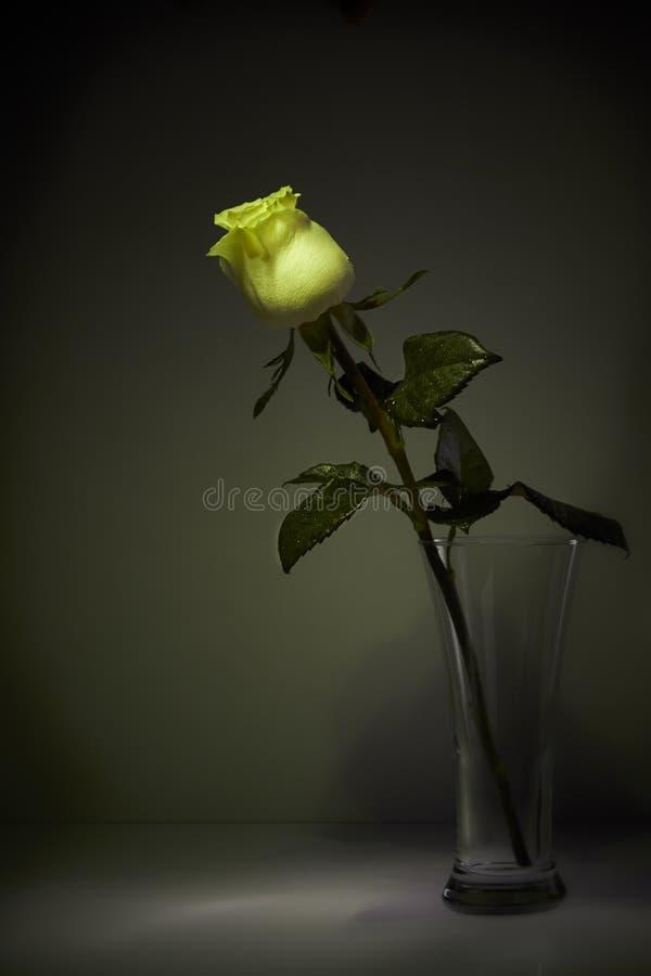 La sombra de la rosa en el cuarto oscuro Todavía vida 1 fotografía de archivo