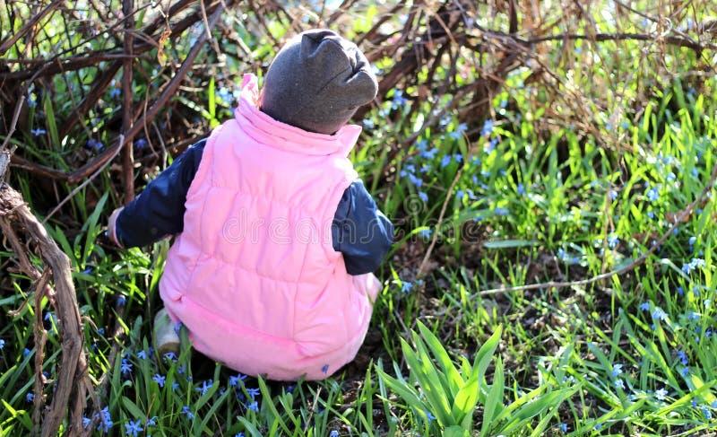 la sonrisa muchacha con gusto vestida en un casquillo se sienta en sus rodillas entre las flores de snowdrops azules en el viñedo imagen de archivo