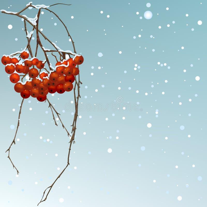 La sorbe d'amorçage de fond de l'hiver. illustration stock