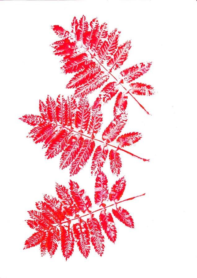 La sorbe rouge tir?e par la main d'aquarelle part sur le fond blanc Configuration sans joint d'automne photo libre de droits