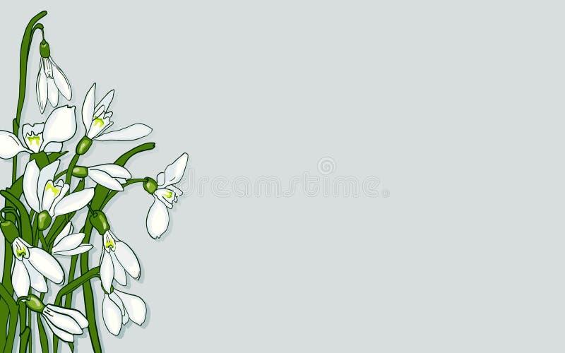 La sorgente fiorisce gli snowdrops illustrazione vettoriale