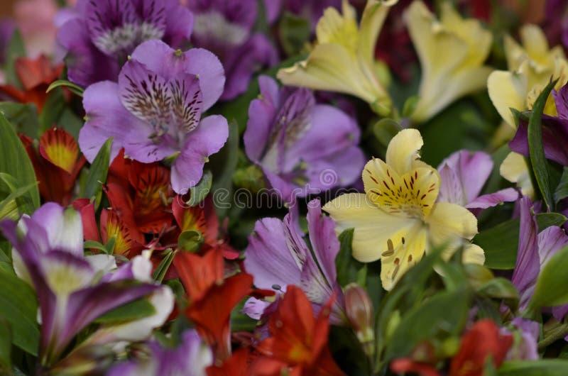La sorgente fiorisce il mazzo fotografia stock