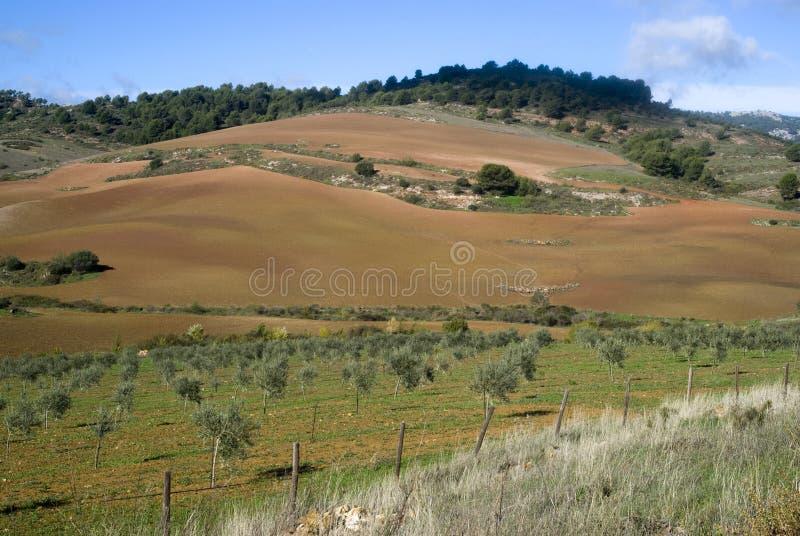 La sosta naturale Sierra de las Nieves, Spagna immagini stock libere da diritti