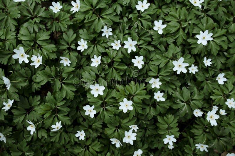 Download La source fleurit le fond photo stock. Image du pelouse - 45350504