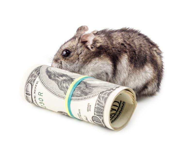 La souris ronge l'argent photos libres de droits