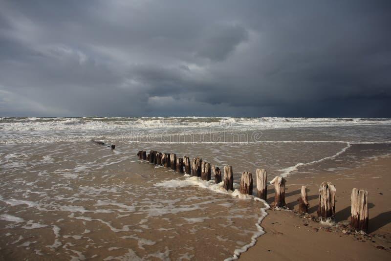 La spiaggia baltica con di legno impallidice fotografia stock libera da diritti