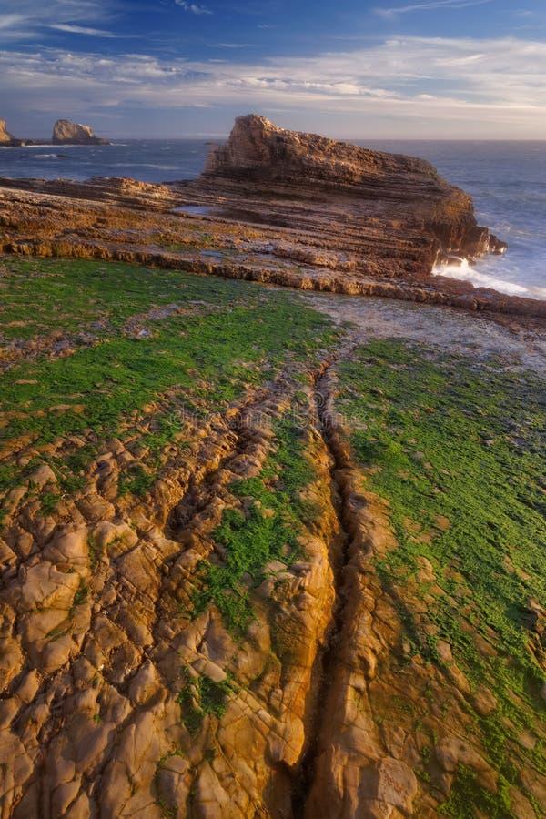 La spiaggia della pantera fotografia stock libera da diritti