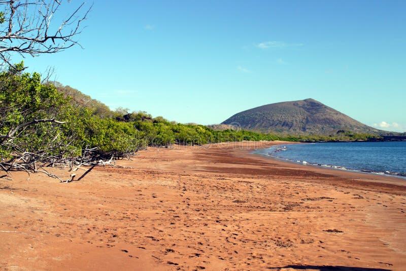 La spiaggia di Espumilla con il fantasma rosso compensa la deriva, Santiago Island, Galapagos immagine stock