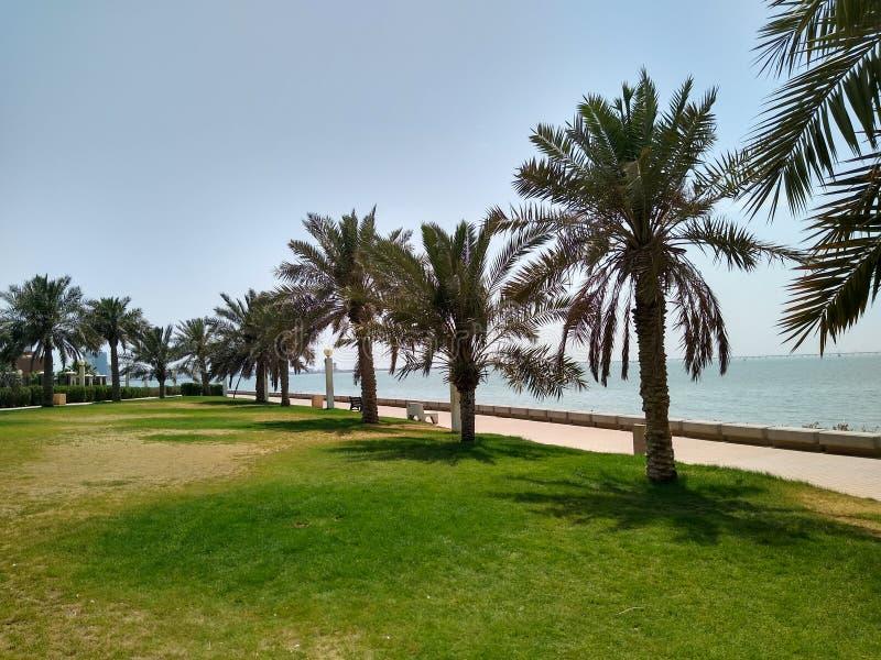La spiaggia e le palme sopra vicino al golf arabo del mare immagini stock libere da diritti