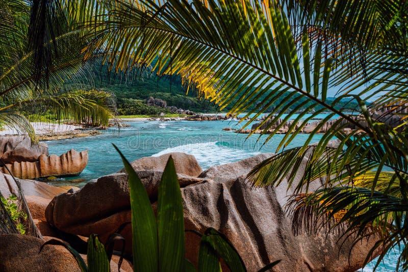 La spiaggia isolata tropicale ha incorniciato di natura il fogliame durante il giro di trekking attraverso la giungla alla spiagg fotografia stock libera da diritti