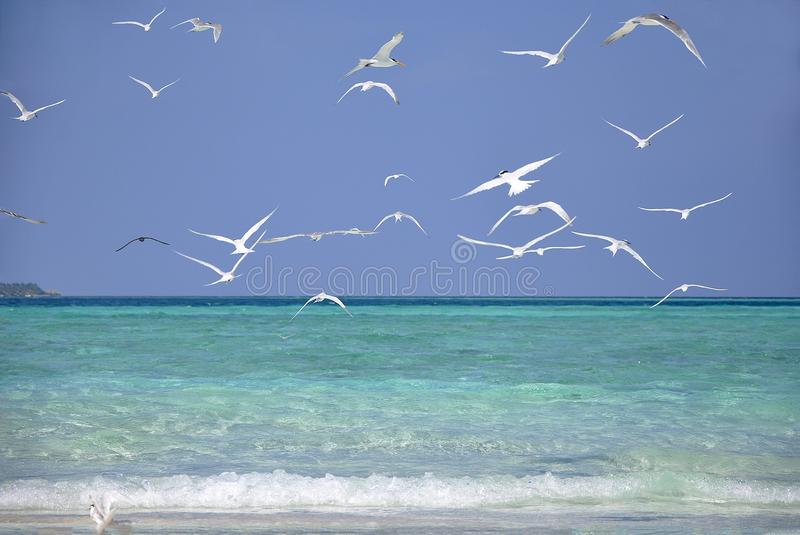 La spiaggia in Maldive fotografia stock