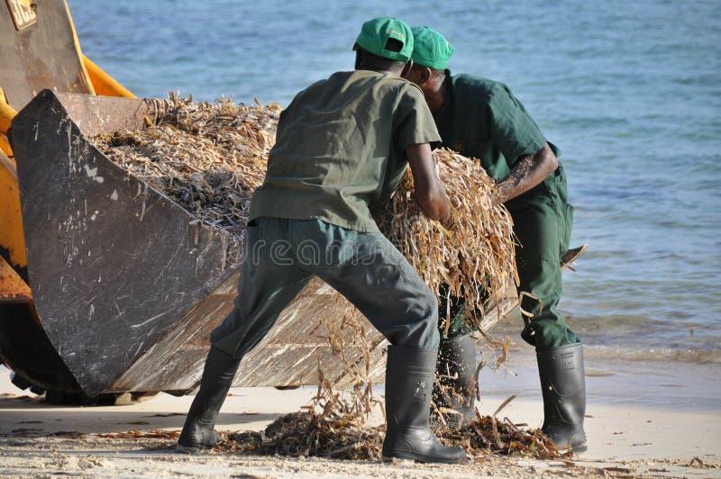 La spiaggia pulita immagini stock libere da diritti